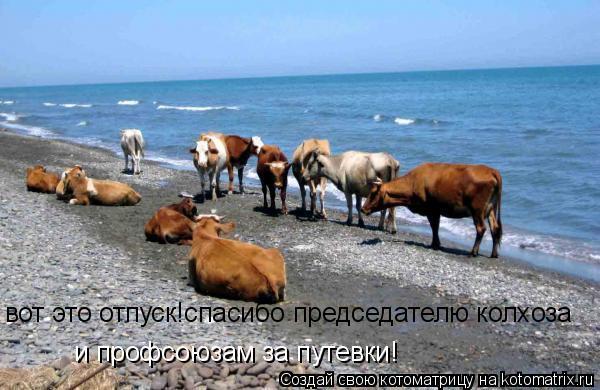 Котоматрица: и профсоюзам за путевки! вот это отпуск!спасибо председателю колхоза