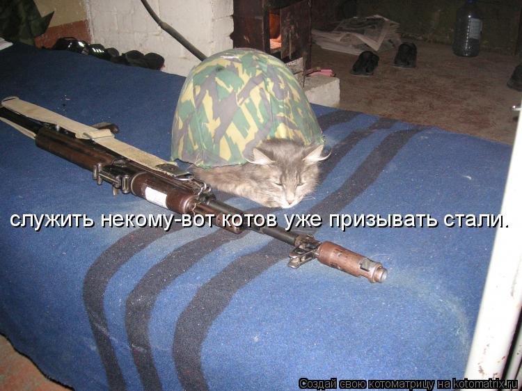 Котоматрица: служить некому-вот котов уже призывать стали.
