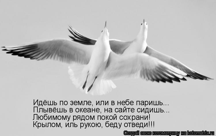 Котоматрица: Идёшь по земле, или в небе паришь... Плывёшь в океане, на сайте сидишь... Любимому рядом покой сохрани! Крылом, иль рукою, беду отведи!!!
