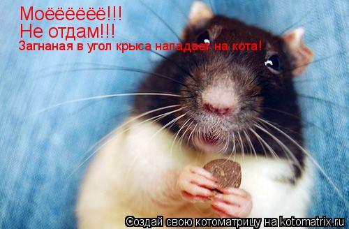Котоматрица: Моёёёёёё!!! Не отдам!!! Загнаная в угол крыса нападает на кота!