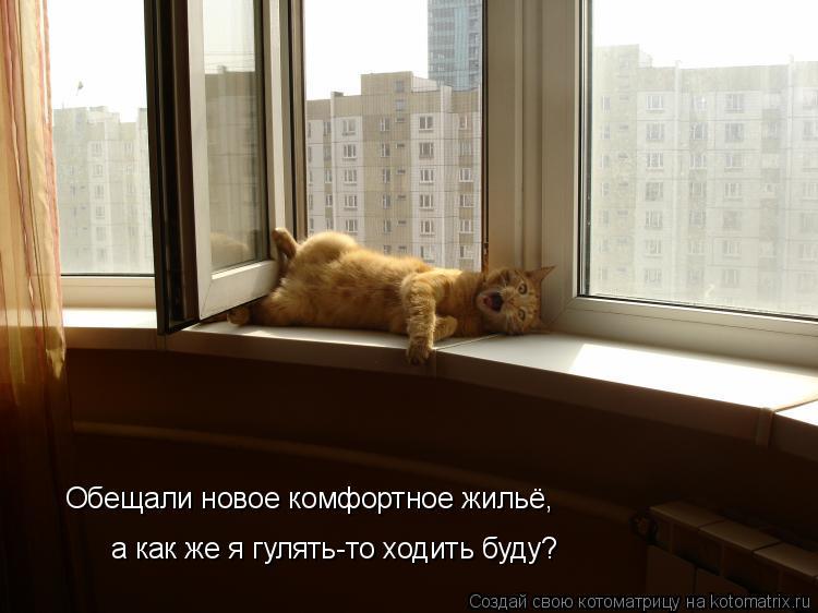 Котоматрица: а как же я гулять-то ходить буду? Обещали новое комфортное жильё,