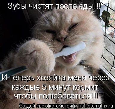 Котоматрица: Зубы чистят после еды!!! И теперь хозяйка меня через  каждые 5 минут кормит чтобы полюбоваться!!!