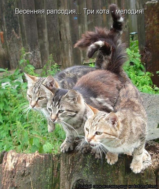 Котоматрица: Весенняя рапсодия... Три кота - мелодия!