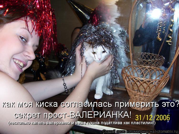 Котоматрица: как моя киска согласилась примерить это? секрет прост-ВАЛЕРИАНКА! (несколько капель валерианки и ваша кошка податлива как пластилин!)