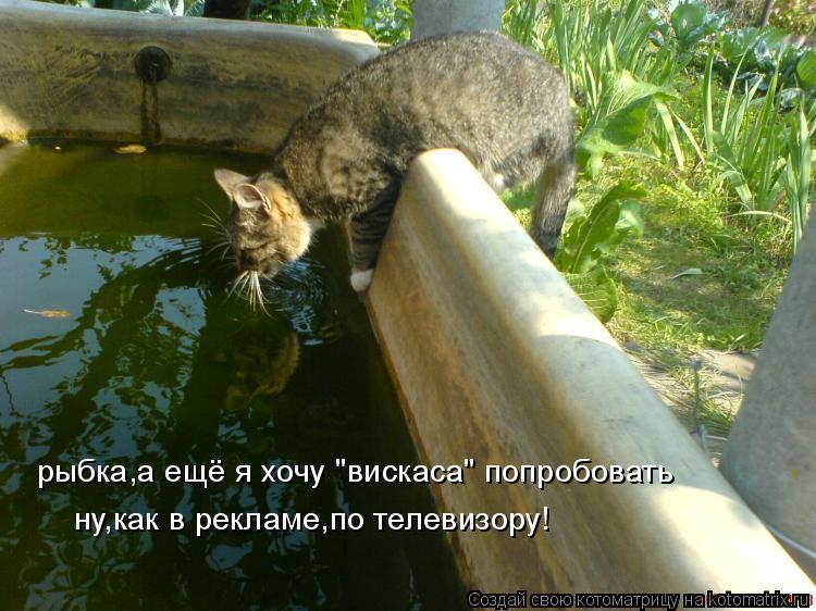 """Котоматрица: рыбка,а ещё я хочу """"вискаса"""" попробовать ну,как в рекламе,по телевизору!"""