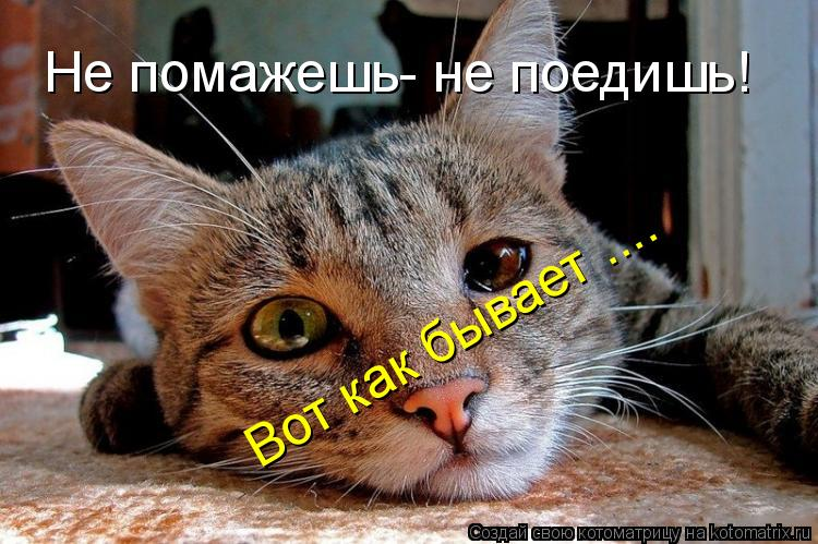 http://kotomatrix.ru/images/lolz/2009/05/04/7l.jpg