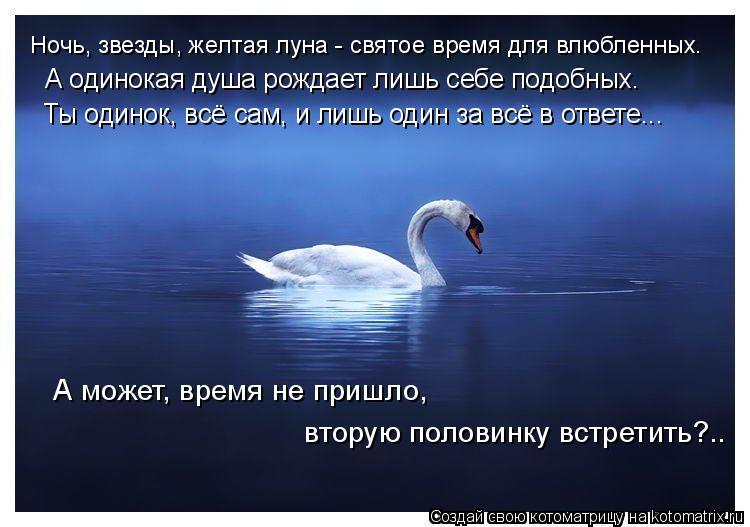 Котоматрица: Ночь, звезды, желтая луна - святое время для влюбленных.  А может, время не пришло,  вторую половинку встретить?.. А одинокая душа рождает лишь