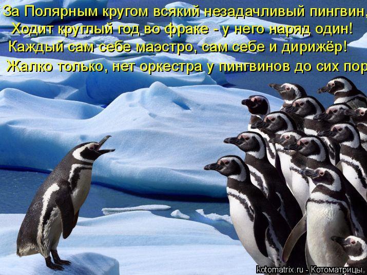 Котоматрица: Ходит круглый год во фраке - у него наряд один! За Полярным кругом всякий незадачливый пингвин,  Каждый сам себе маэстро, сам себе и дирижёр!