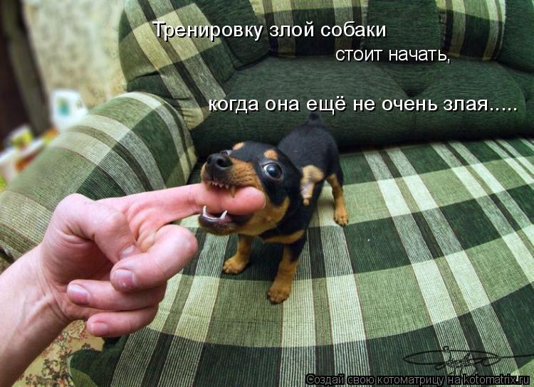 Котоматрица: Тренировку злой собаки стоит начать, когда она ещё не очень злая.....