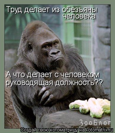 http://kotomatrix.ru/images/lolz/2009/05/04/ff.jpg