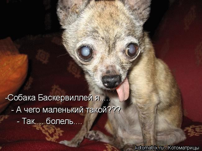 http://kotomatrix.ru/images/lolz/2009/05/04/l.jpg
