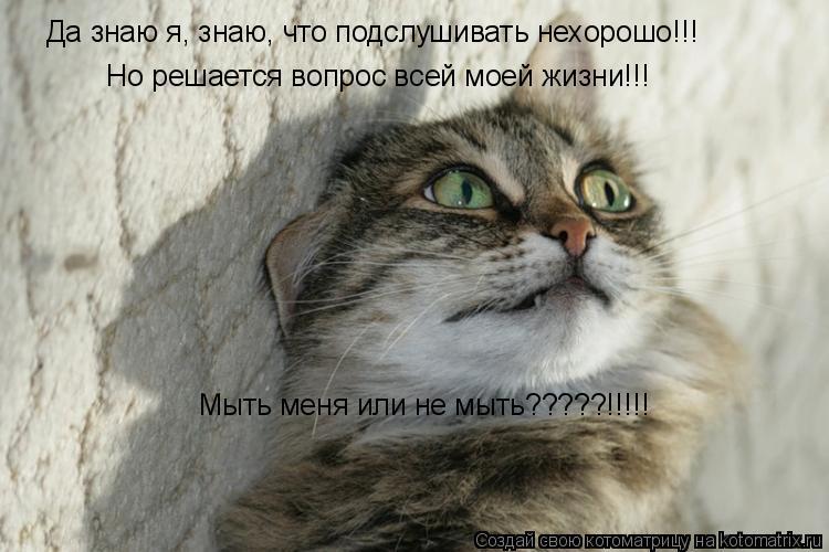 Котоматрица: Да знаю я, знаю, что подслушивать нехорошо!!! Но решается вопрос всей моей жизни!!! Мыть меня или не мыть?????!!!!!