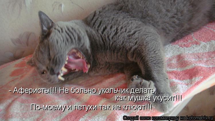 Котоматрица: - Аферисты!!! Не больно укольчик делать, как мушка укусит!!! По-моему и петухи так не клюют!!! По-моему и петухи так не клюют!!!