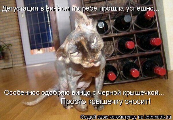 Котоматрица: Дегустация в винном погребе прошла успешно... Особеннос одобряю винцо с черной крышечкой... Просто крышечку сносит!