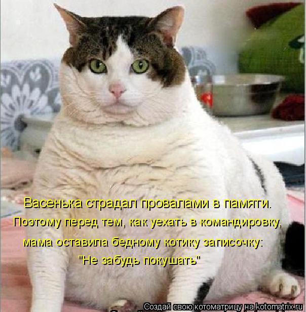 """Котоматрица: Поэтому перед тем, как уехать в командировку, """"Не забудь покушать"""" Васенька страдал провалами в памяти. мама оставила бедному котику записо"""