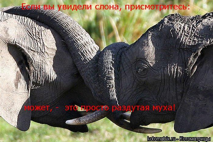 Котоматрица: Если вы увидели слона, присмотритесь: может, -  это просто раздутая муха!