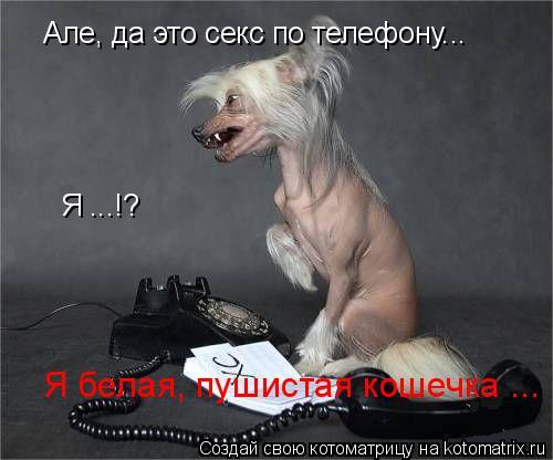 http://kotomatrix.ru/images/lolz/2009/05/05/DT.jpg