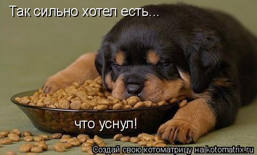 Котоматрица: Так сильно хотел есть... что уснул!