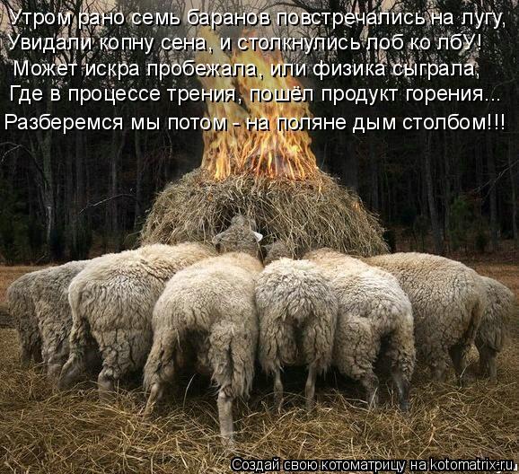 Котоматрица: Утром рано семь баранов повстречались на лугу, Увидали копну сена, и столкнулись лоб ко лбУ!  Может искра пробежала, или физика сыграла, Где