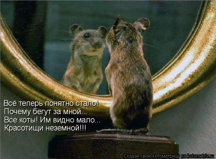 Котоматрица: Всё теперь понятно стало! Почему бегут за мной... Все коты! Им видно мало... Красотищи неземной!!!
