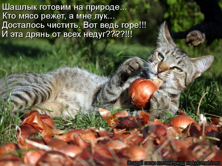 Котоматрица: Шашлык готовим на природе... Кто мясо режет, а мне лук... Досталось чистить. Вот ведь горе!!! И эта дрянь от всех недуг????!!!