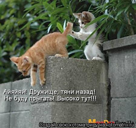 Котоматрица: Айяйяй! Дружище, тяни назад! Не буду прыгать! Высоко тут!!!