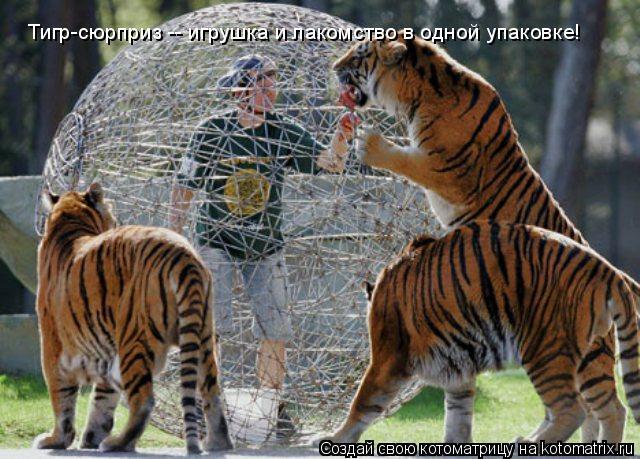 Котоматрица: Тигр-сюрприз -- игрушка и лакомство в одной упаковке!