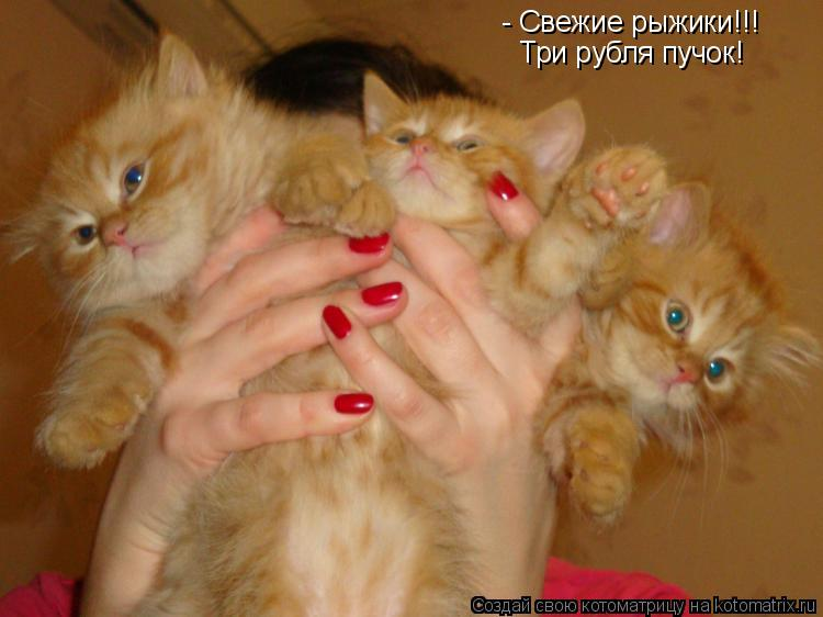 Котоматрица: - Свежие рыжики!!! Три рубля пучок!