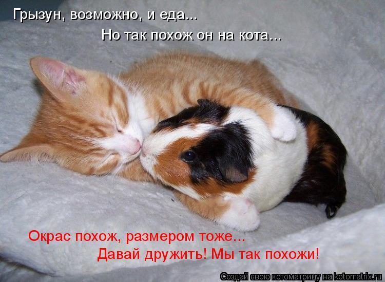 Котоматрица: Грызун, возможно, и еда... Но так похож он на кота... Окрас похож, размером тоже... Давай дружить! Мы так похожи!