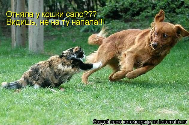 Котоматрица: Отняла у кошки сало??? Видишь, не на ту напала!!!