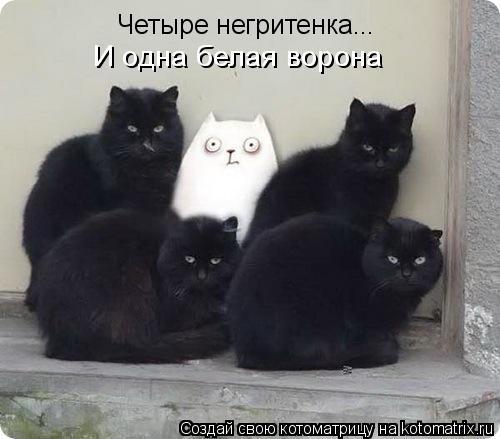 Котоматрица: Четыре негритенка... И одна белая ворона