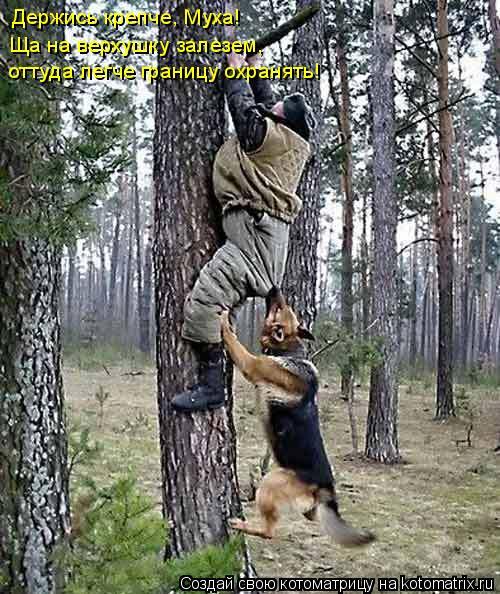 Котоматрица: Держись крепче, Муха! Ща на верхушку залезем, оттуда легче границу охранять!