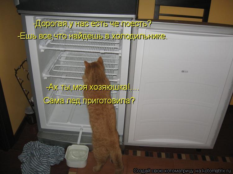 Котоматрица: -Дорогая,у нас есть че поесть? -Ешь все,что найдешь в холодильнике. -Ах ты,моя хозяюшка!.... Сама лед приготовила?