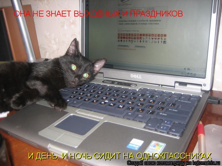 RE: Приколы кошек. vitalij09.