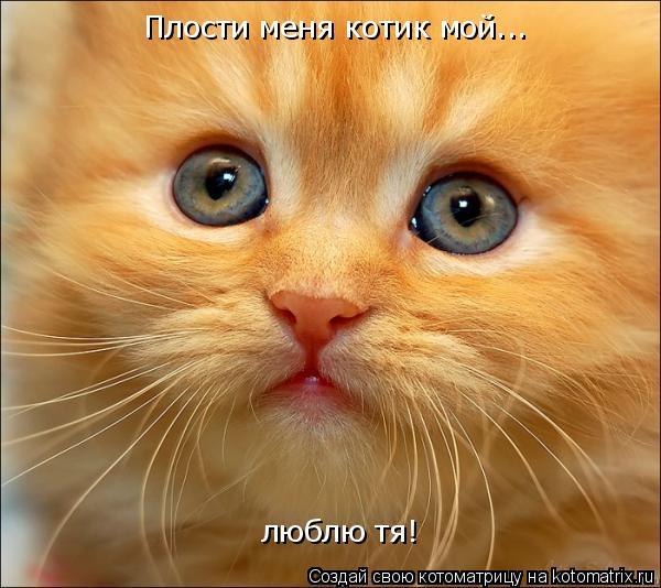 Котоматрица: Плости меня котик мой... люблю тя!