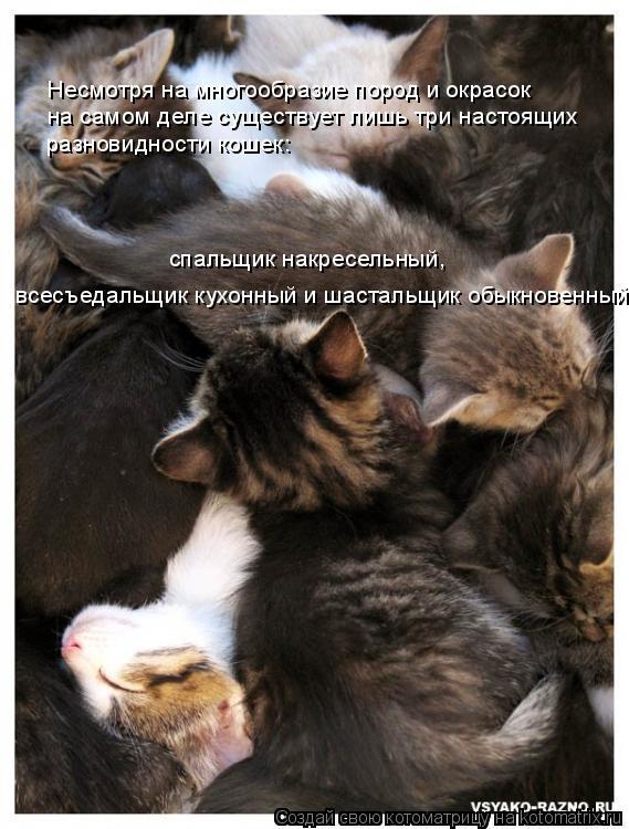 Котоматрица: Несмотря на многообразие пород и окрасок на самом деле существует лишь три настоящих разновидности кошек: спальщик накресельный, всесъеда