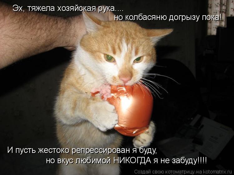 Котоматрица: Эх, тяжела хозяйская рука.... но колбасяню догрызу пока! И пусть жестоко репрессирован я буду, но вкус любимой НИКОГДА я не забуду!!!!