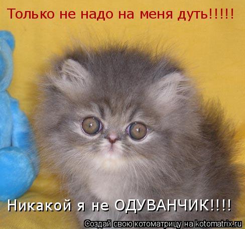 Котоматрица: Только не надо на меня дуть!!!!! Никакой я не ОДУВАНЧИК!!!!