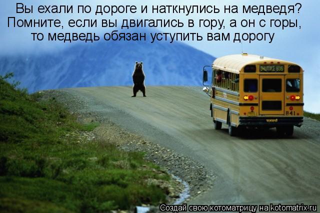 Котоматрица: Вы ехали по дороге и наткнулись на медведя?  Помните, если вы двигались в гору, а он с горы,  то медведь обязан уступить вам дорогу