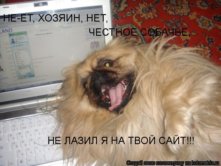 Котоматрица: НЕ-ЕТ, ХОЗЯИН, НЕТ, ЧЕСТНОЕ СОБАЧЬЕ, НЕ ЛАЗИЛ Я НА ТВОЙ САЙТ!!!