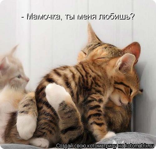 Котоматрица: - Мамочка, ты меня любишь?