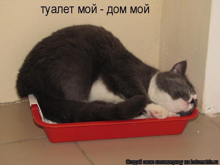 Котоматрица: туалет мой - дом мой
