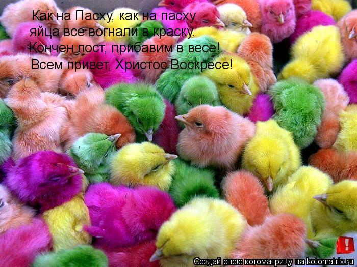 Котоматрица: Как на Пасху, как на пасху яйца все вогнали в краску. Кончен пост, прибавим в весе! Всем привет, Христос Воскресе!