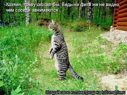 Котоматрица: -Хозяин, траву скосил бы. Ведь ни фига же не видно,  чем соседи занимаются.