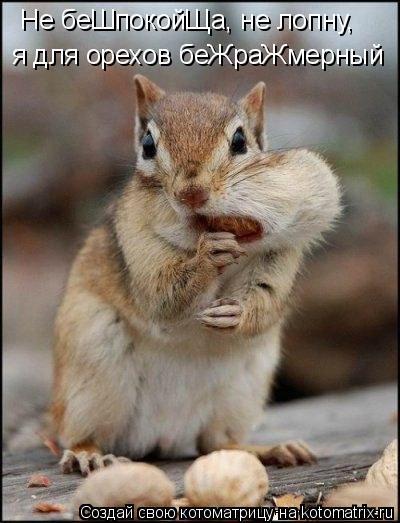 Котоматрица: Не беШпокойЩа, не лопну, я для орехов беЖраЖмерный