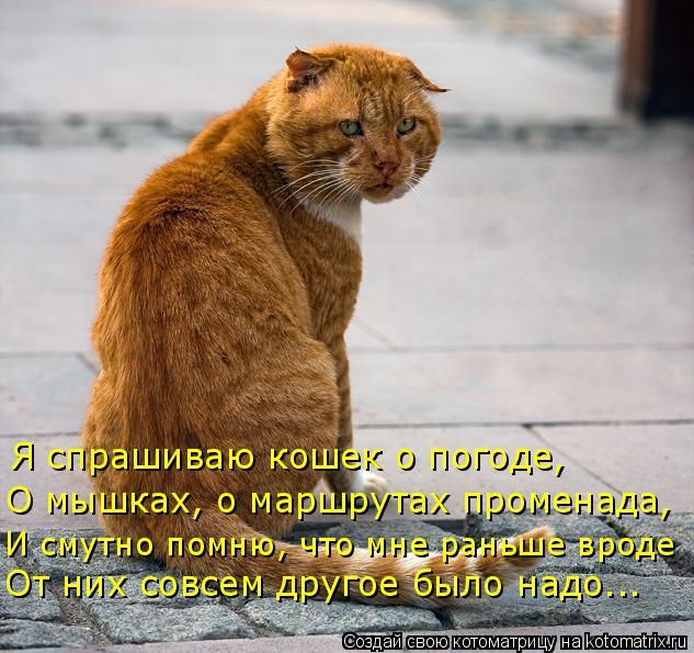 Котоматрица: Я спрашиваю кошек о погоде, О мышках, о маршрутах променада, И смутно помню, что мне раньше вроде От них совсем другое было надо...