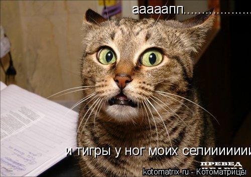 Котоматрица: и тигры у ног моих селииииииииииии........... ааааапп......................и тигры у ног моих селииииииииииии...........