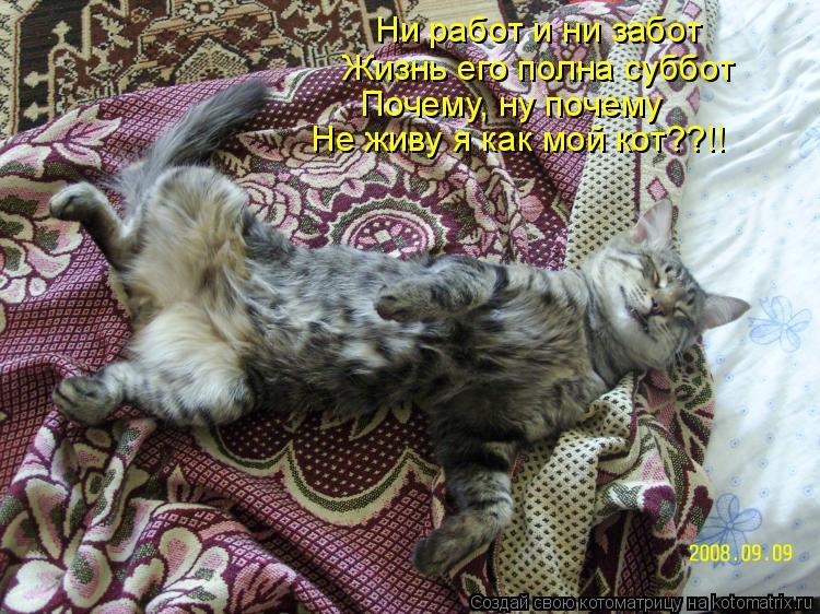 Котоматрица: Не живу я как мой кот??!! Почему, ну почему Жизнь его полна суббот Ни работ и ни забот