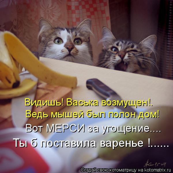 Котоматрица: Видишь! Васька возмущен!. Ведь мышей был полон дом! Вот МЕРСИ за угощение.... Ты б поставила варенье !......