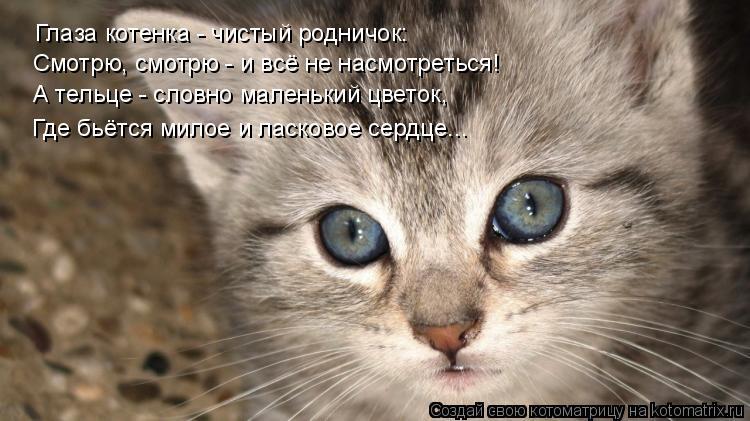 Котоматрица: Глаза котенка - чистый родничок: Смотрю, смотрю - и всё не насмотреться! А тельце - словно маленький цветок, Где бьётся милое и ласковое сердц